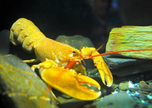 Things to do in Cornwall - The National Lobster Hatchery in Cornwall.