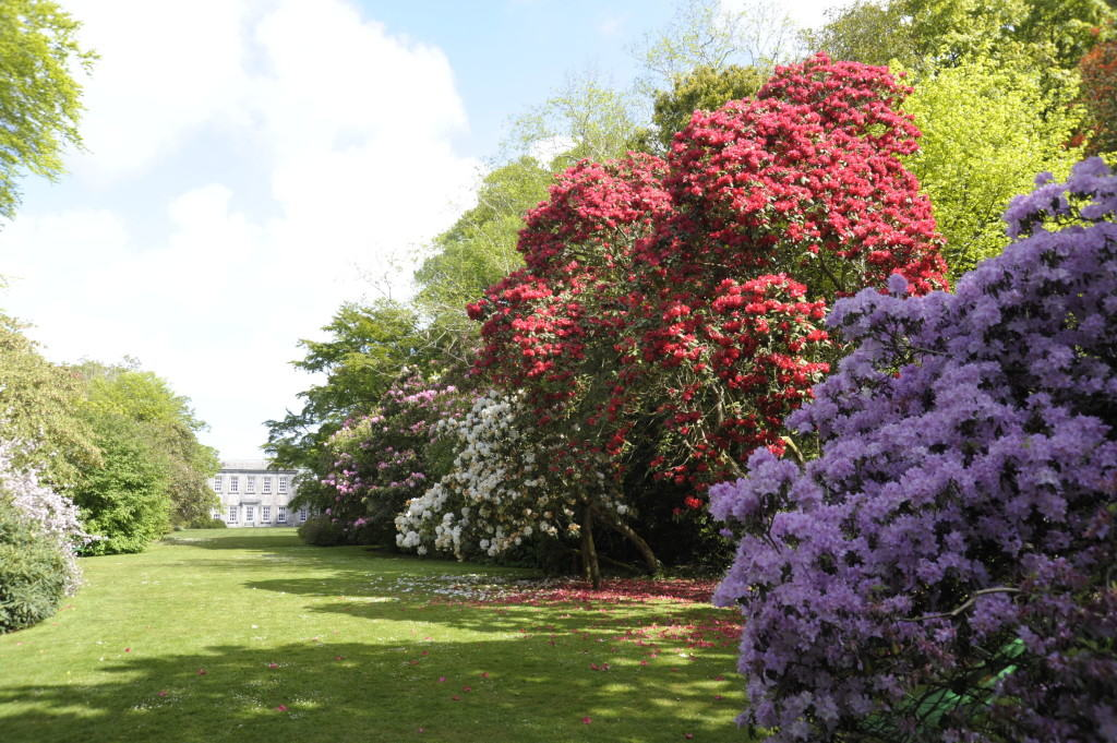 Trewithen Estate - a great day out in Cornwall