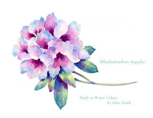 Cornish rhododendron watercolour painting
