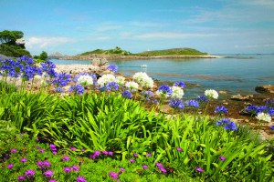 Tresco, Isles of Scilly.