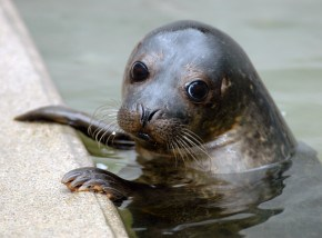 Things to do in Cornwall - The Cornish Seal Sanctuary
