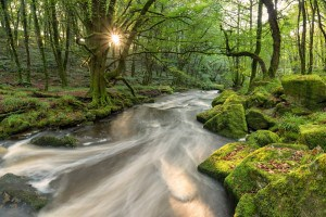 Places to see in Cornwall - Golitha Falls
