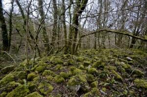Kennall Vale, woodland in Cornwall