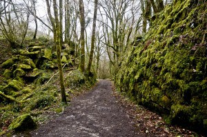 Kennall Vale, woodland near Redruth in Cornwall
