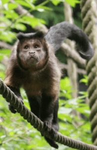 Things to do in Cornwall - Monkey Sanctuary