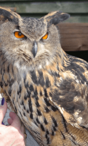 Screech owl sanctuary feature business images