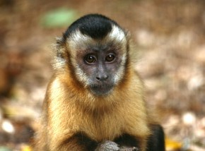 Things to do in Cornwall - Wild Futures Monkey Sanctuary