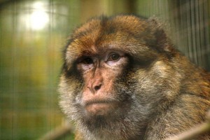 Days out in Cornwall - Wild Futures Monkey Sanctuary