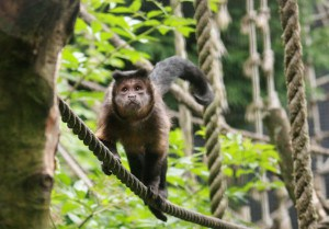 Attractions in Cornwall - Wild Futures Monkey Sanctuary