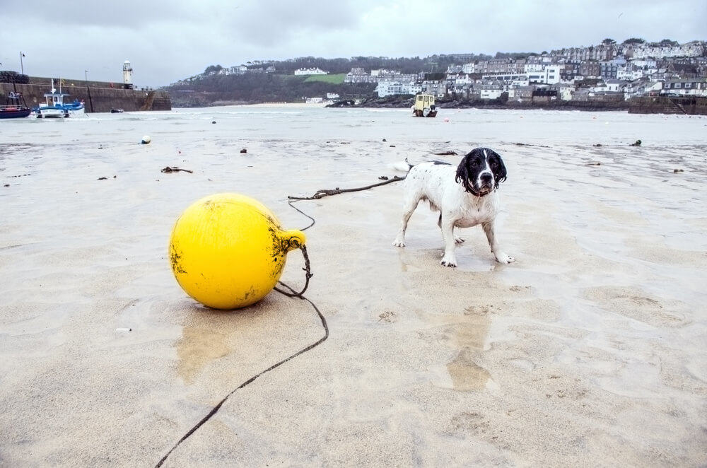 Where to find dog friendly beaches in Cornwall