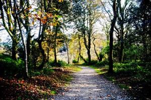 Woodland Walks in Cornwall