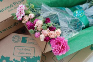 Made in Cornwall - Scented Pinks