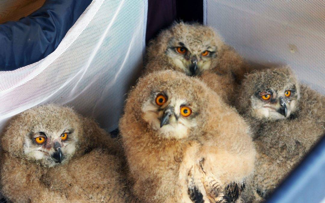 Never been to… The Screech Owl Sanctuary