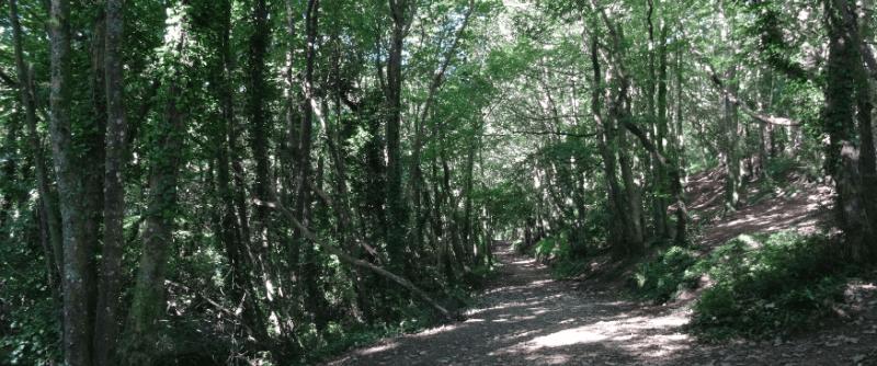 Never been to… Tehidy Woods